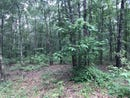 Lot 8 Chimney, TALLAHASSEE, FL 32312