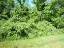 Lot 38 Lakewood, Vincennes, IN 47591