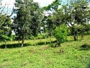 Lake view building lot: Lake View lot ready for construction, Barrio El Roble, Guanacaste