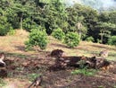 Near the Coast Agricultural Land For Sale in San Jeronimo, San Jeronimo, Puntarenas