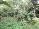 9 ACRES - Beautiful Bamboo Home in the Mountains, 2 min walk to Private Waterfall!!, Barú, San José